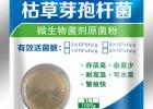 微元生物高效微生物芽孢杆菌供应商枯草芽孢杆菌批发商