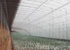 温室大棚建设要考虑的要素有哪几个?