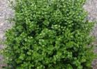 仿真草/人造草皮/塑料草坪/假草绿化装饰背景墙/植物墙配件